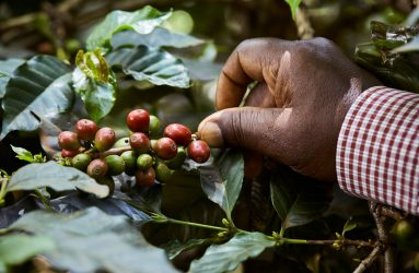 Kenyan Coffee Trail